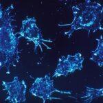 """過剰な免疫を防ぐ""""制御性T細胞(Tレグ)"""""""