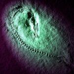 海を追われた祖先はどこへ向かったか?